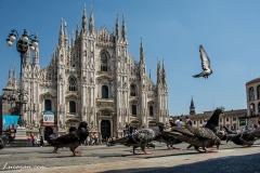 Milano-7398
