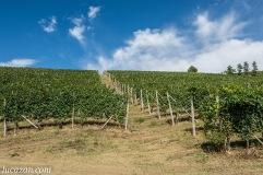 Paesaggio Langhe Piemonte